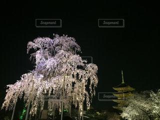 No.478773 桜