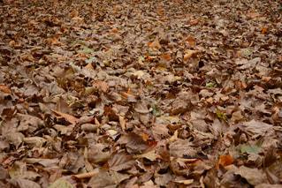 秋の写真・画像素材[584087]