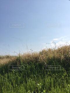 土手沿いの草原の写真・画像素材[478962]