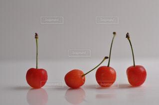 サクランボが4つの写真・画像素材[482097]