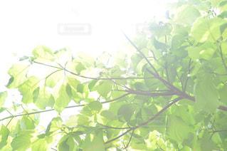 自然の写真・画像素材[512401]