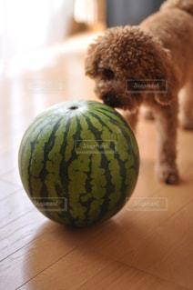 犬 - No.536863