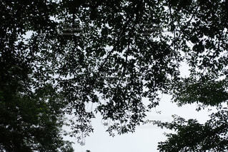 空の写真・画像素材[586859]