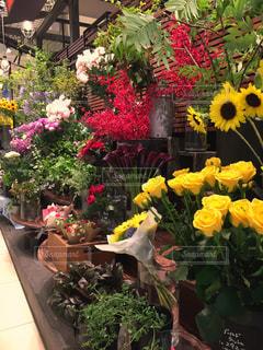 花の写真・画像素材[600785]