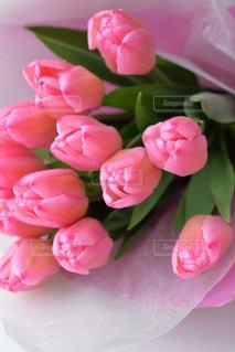 花の写真・画像素材[605310]