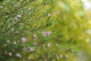 花の写真・画像素材[673530]