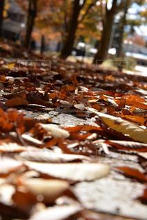 落ち葉の写真・画像素材[804300]