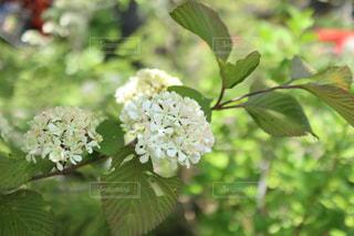 近くの花のアップの写真・画像素材[1153810]