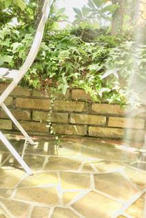 庭の写真・画像素材[1396317]