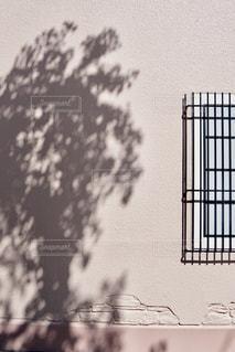 木の影の写真・画像素材[1517216]