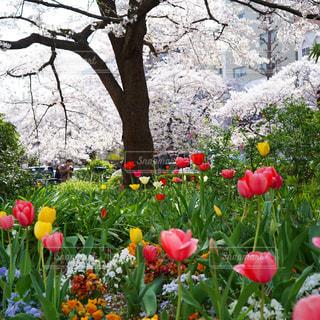 春爛漫の写真・画像素材[1978575]