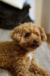 かわいい犬の写真・画像素材[2049623]