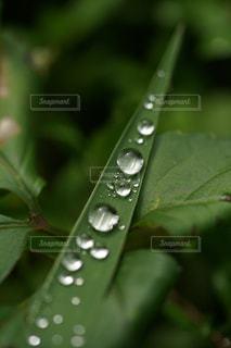 雨上がりの写真・画像素材[2647147]