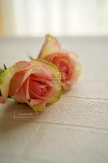 薔薇の写真・画像素材[3126448]