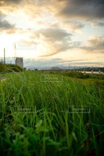夕方の河川敷の写真・画像素材[3750182]