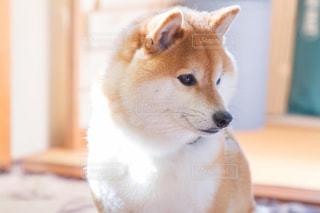 犬の写真・画像素材[479440]