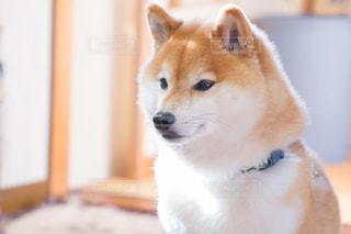 犬の写真・画像素材[479442]