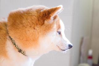 犬の写真・画像素材[479481]