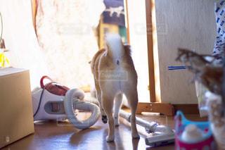 犬の写真・画像素材[479498]