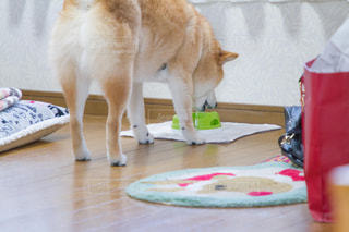 犬の写真・画像素材[479500]
