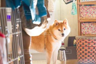 犬の写真・画像素材[479511]