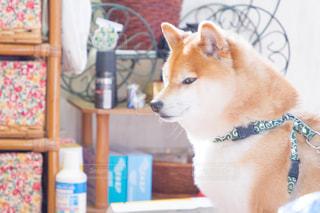 犬の写真・画像素材[479512]