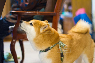 犬の写真・画像素材[479519]