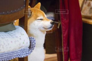 犬の写真・画像素材[479572]