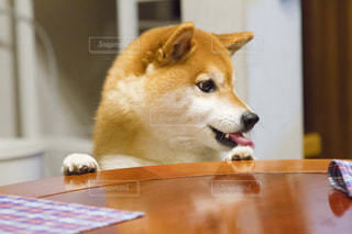 犬の写真・画像素材[479576]