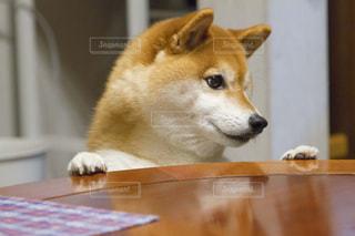 犬の写真・画像素材[479586]
