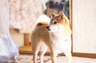 犬の写真・画像素材[479653]