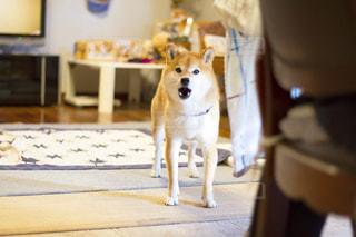 犬の写真・画像素材[480179]