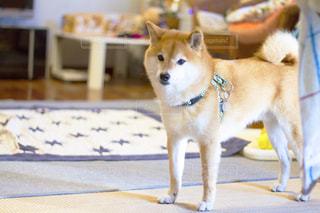 犬 - No.480187