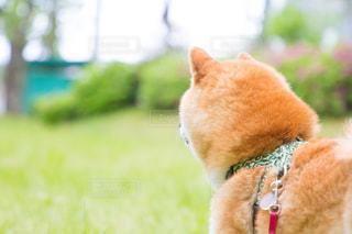 犬の写真・画像素材[493082]