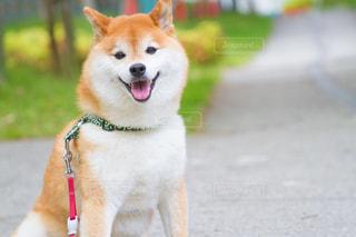 犬の写真・画像素材[506799]