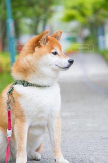 犬の写真・画像素材[506812]