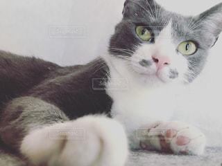 猫の写真・画像素材[479164]