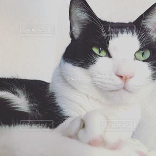 近くに猫のアップの写真・画像素材[1310386]