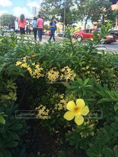 花の写真・画像素材[479292]