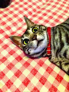 猫の写真・画像素材[479336]