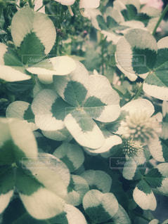 自然の写真・画像素材[508053]