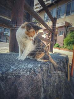 猫の写真・画像素材[511405]
