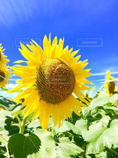 花の写真・画像素材[481726]