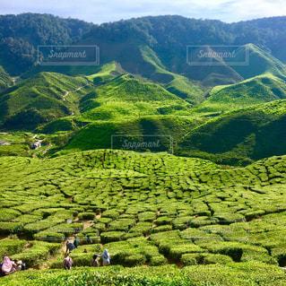 緑豊かな緑の丘の中腹で放牧の羊の群れの写真・画像素材[1029505]