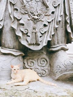 タイのネコの写真・画像素材[1613855]
