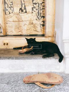 建物の上に横になっている黒い猫の写真・画像素材[1613900]