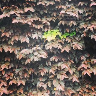 緑の写真・画像素材[479711]