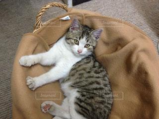 猫の写真・画像素材[479800]