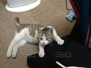 猫の写真・画像素材[479801]