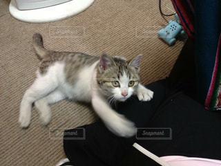 猫の写真・画像素材[479802]